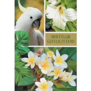 Wenskaart met witte valkparkiet en witte bloemen
