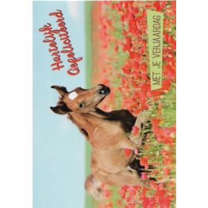 wenskaart met paard in een rozenveld hartelijk gefeliciteerd