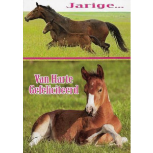 verjaardagskaart met paarden en veulen in een weiland