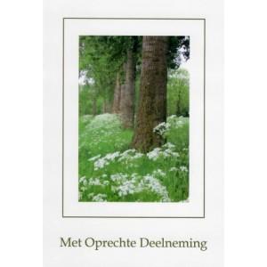 Condoleance wenskaart in kleur met een afbeelding van bomen in een rij.