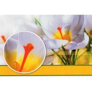 wenskaart zonder tekst met witte bloemen met een oranje kelk
