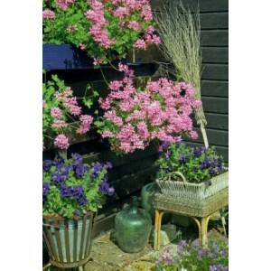 Wenskaart zonder tekst met roze bloemetjes in een tuin