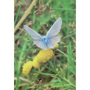 wenskaarten met foto van vlinder op een bloem