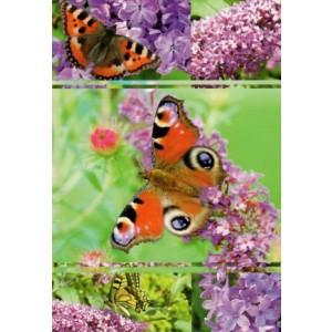 Wenskaart zonder tekst met bloemen en vlinders