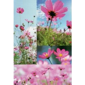 wenskaart met diverse foto's van roze veldbloemen