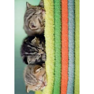 wenskaart met lieve katjes op een stapel handdoeken