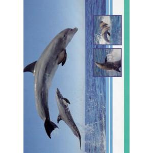 goedkope wenskaart met dolfijnen bestellen
