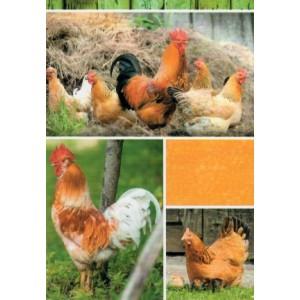 wenskaart zonder tekst om zelf in te vullen met een passe partout van kippen en een haan