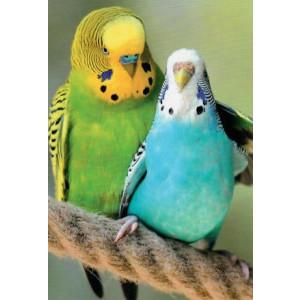 wenskaart twee vogels arm om elkaar heen