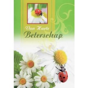 Wenskaart van harte beterschap met margrietjes en een lieveheersbeestje