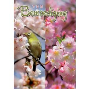 wenskaart ter bemoediging met een vogel op een bloesemtak