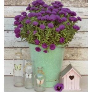 wenskaart zonder tekst met paarse bloemen in een mintgroene emmer