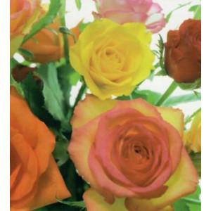 gele en rode rozen op een vierkante wenskaart