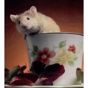 voordelige wenskaarten met een muisje dat uit een koffiekopje klimt
