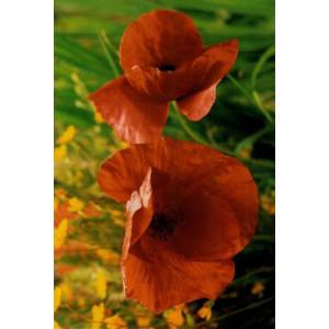 mooie wenskaarten met detailfoto van rode bloemen