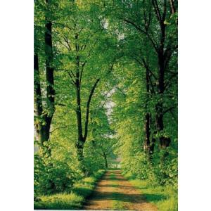 wenskaarten met foto van bos en bospad en bomen met groen blad