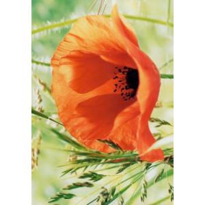 wenskaart met een detailfoto van een rode bloem