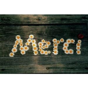 wenskaart met madeliefjes in de vorm van het woord merci