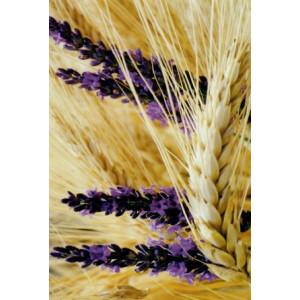wenskaart met een foto van een paarse bloem midden in een korenveld