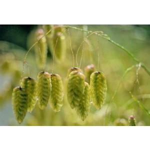 wenskaartje met een detailfoto van tarwe of koren