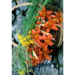 wenskaartje met een rieten mand met daarin diverse kleurrijke bloemen