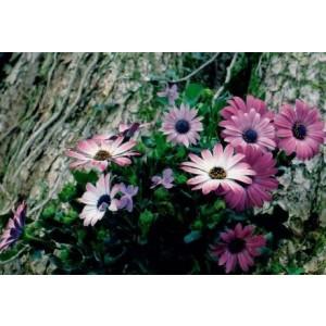 wenskaartje met een detailfoto van roze bloemen op een boom