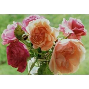 wenskaartje met een foto van diverse gekleurde bloemen tegen een groene achtergrond