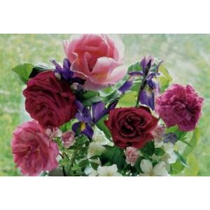 wenskaart met rode en roze bloemen tegen een groene achtergrond