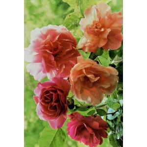 wenskaarten met rode en roze bloemen bestellen