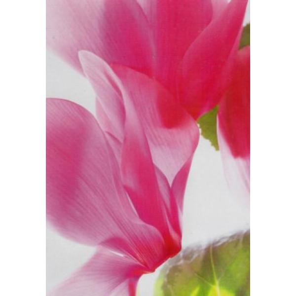 kaartje met roze rozenblaadjes van dichtbij gefotografeerd