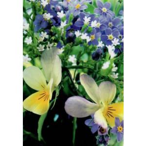 bloemenveld met witte paarse en gele bloemen op een wenskaart