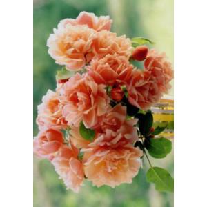 goedkope wenskaart met foto van oranje bloemen in een vaas