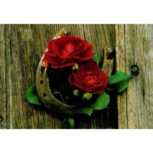 wenskaartje met houten planken en twee rode rozen