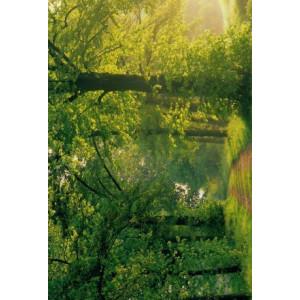 wenskaart met natuurfoto van de zon die het bos in schijnt