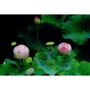 wenskaarten met foto van bloemen in knop