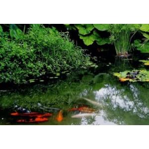 wenskaarten met foto van vijver met vissen en waterlelies