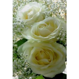 wenskaartje met een foto van drie witte rozen en witte bloesem