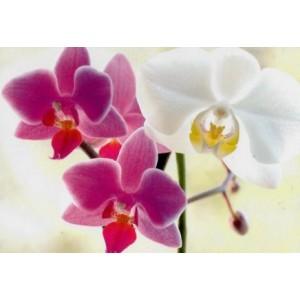 luxe wenskaarten met foto van paarse en witte bloemen