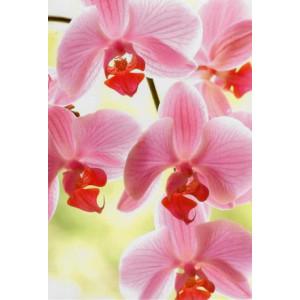 goedkope wenskaarten met een foto van roze met rode bloemen