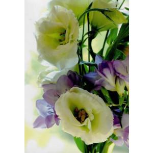 goedkope wenskaarten met witte en paarse bloemen