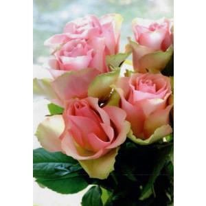 luxe wenskaarten bestellen met een foto van roze rozen