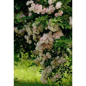 luxe wenskaart met een foto van een boom vol met gekleurde bloemen