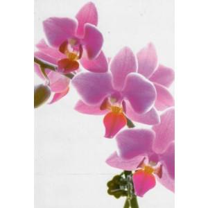 luxe wenskaarten met paarse bloemen op een foto