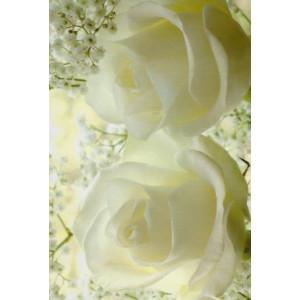 mooie wenskaarten met witte rozen en bloesem