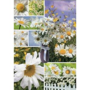 wenskaarten met madeliefjes bestellen fotos van bloemen