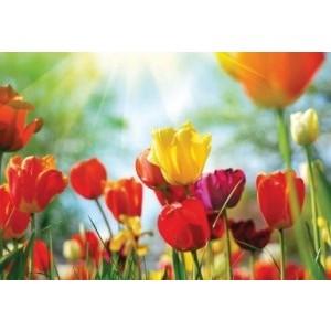 Wenskaart zonder tekst met gekleurde tulpen