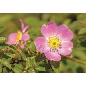 Wenskaart zonder tekst met de afbeelding van paarse bloemen