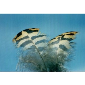 voordelig wenskaarten bestellen met foto van vogelveren