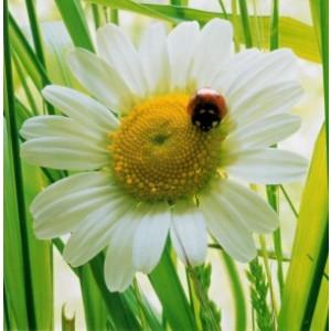 Blanco wenskaart zonder tekst van 16 bij 16 centimeter met een bloemmotief