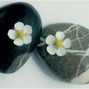 Blanco wenskaart zonder tekst van 17 bij 17 centimeter met een bloemmotief en twee stenen